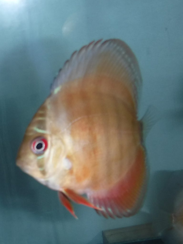 How to Keep Healthy Discus