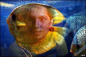 Selecting Discus Fish; How to Choose & Buy Best Discus